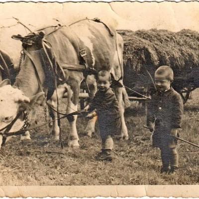 Opa Richard mit seiner Lieblingskuh Frida