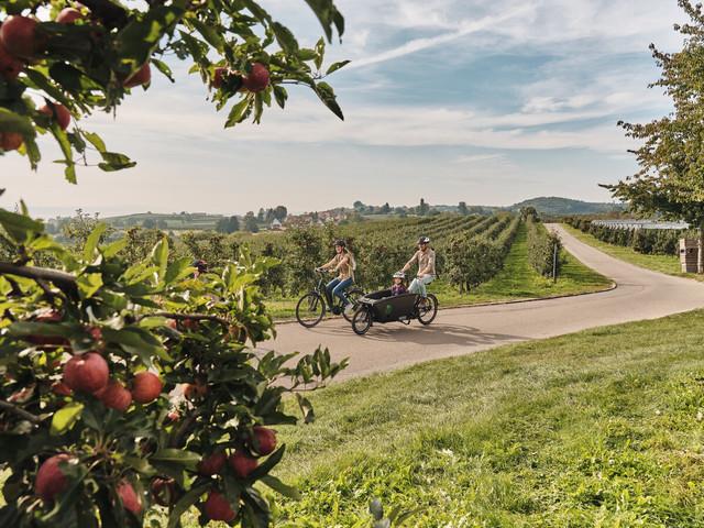 Unterwegs durch die Apfelplantagen bei Immenstaad-Kippenhausen.